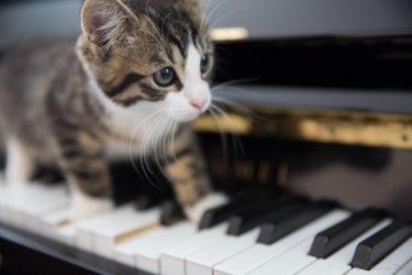 【練習から本番まで】ピアノ弾き語りのコツと心構え